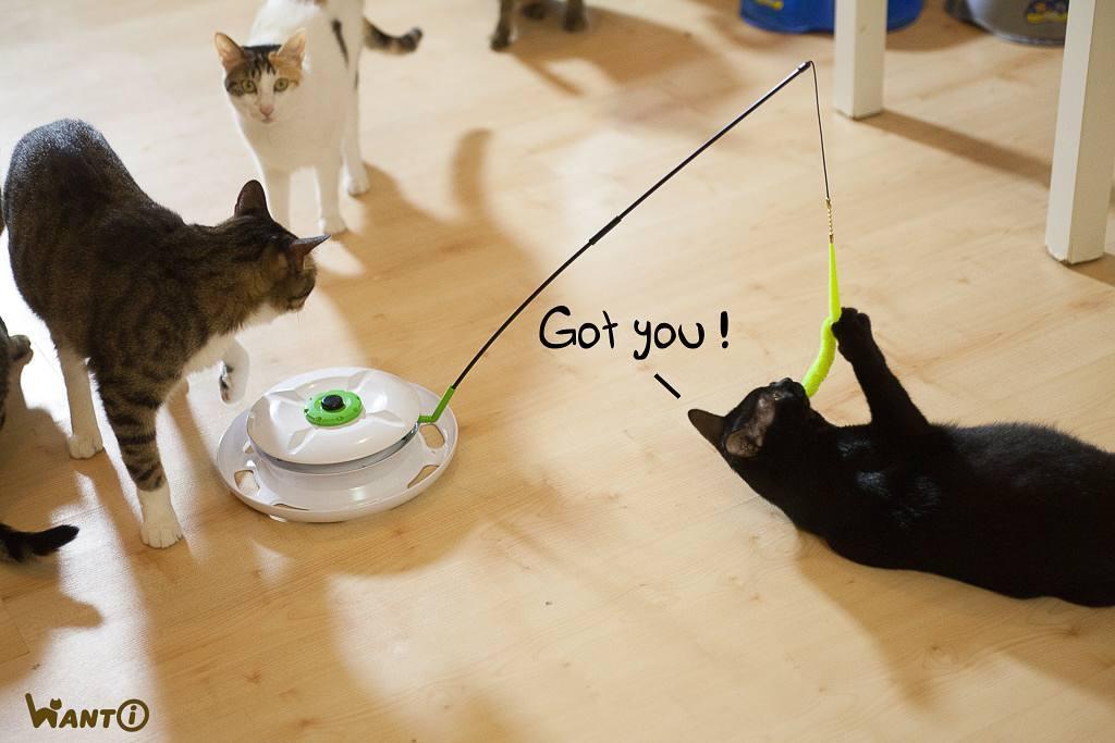 台灣WANTi 六合一互動貓玩具-15