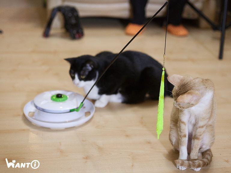 台灣WANTi 六合一互動貓玩具-18
