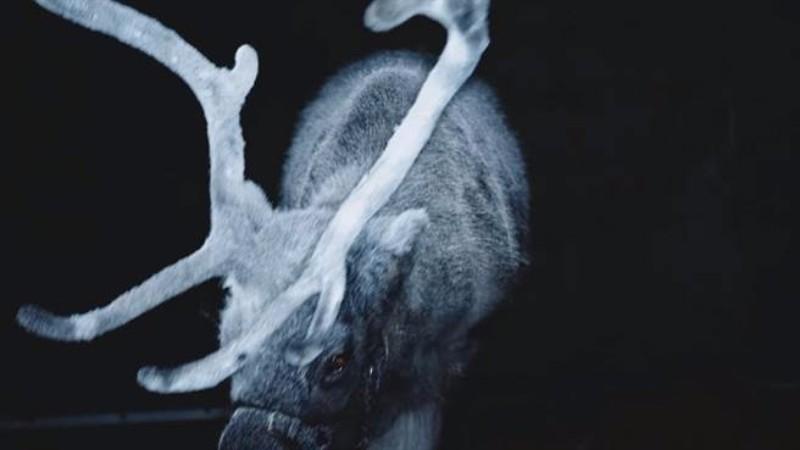 瑞典Albedo反光噴霧06