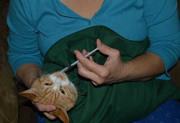印度 Cat in the Bag 貓貓外出袋10