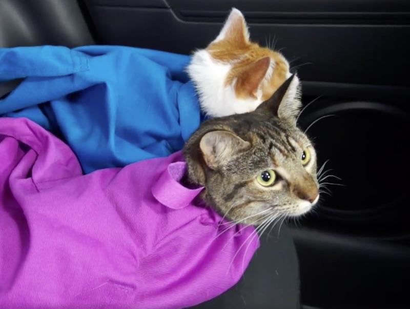 印度 Cat in the Bag 貓貓外出袋13