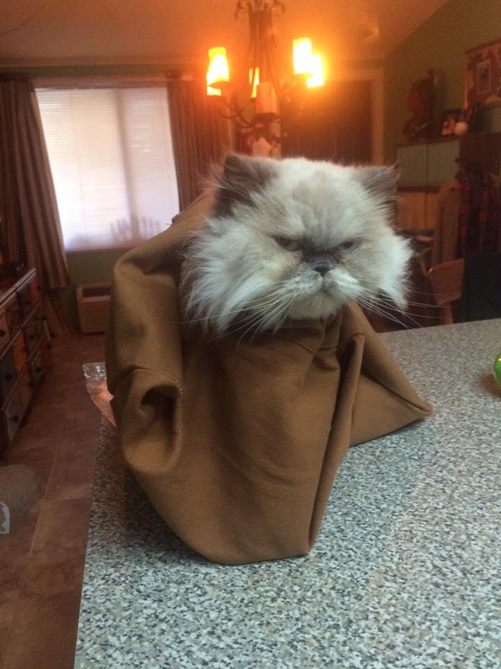 印度 Cat in the Bag 貓貓外出袋15