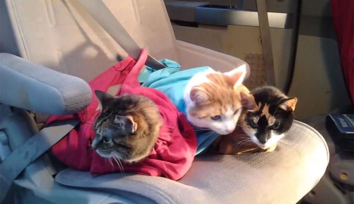 印度 Cat in the Bag 貓貓外出袋16