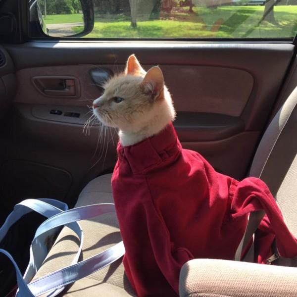 印度 Cat in the Bag 貓貓外出袋17