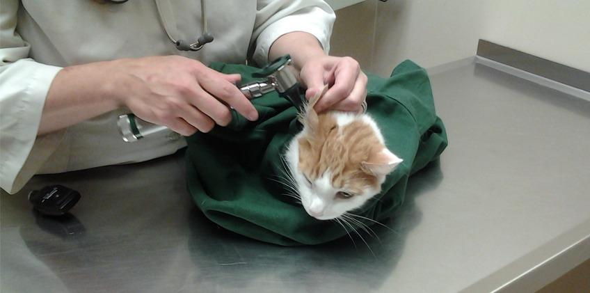 印度 Cat in the Bag 貓貓外出袋19