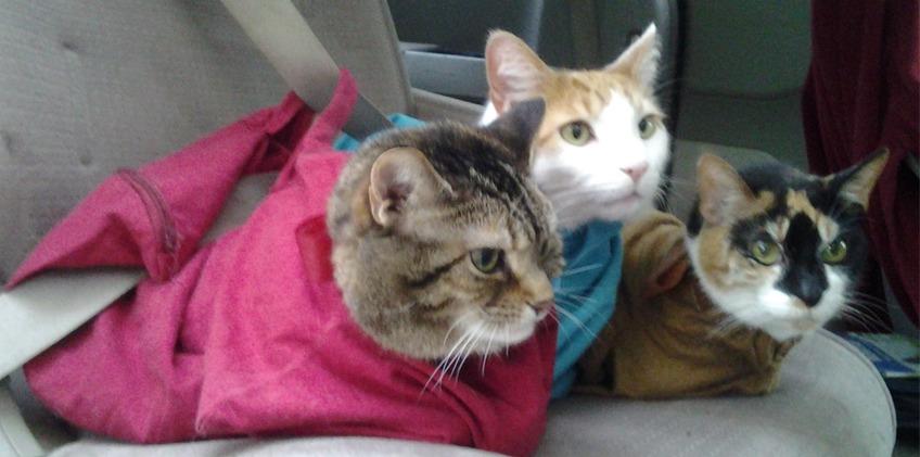 印度 Cat in the Bag 貓貓外出袋21