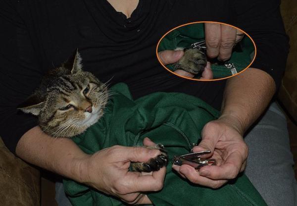 印度 Cat in the Bag 貓貓外出袋5