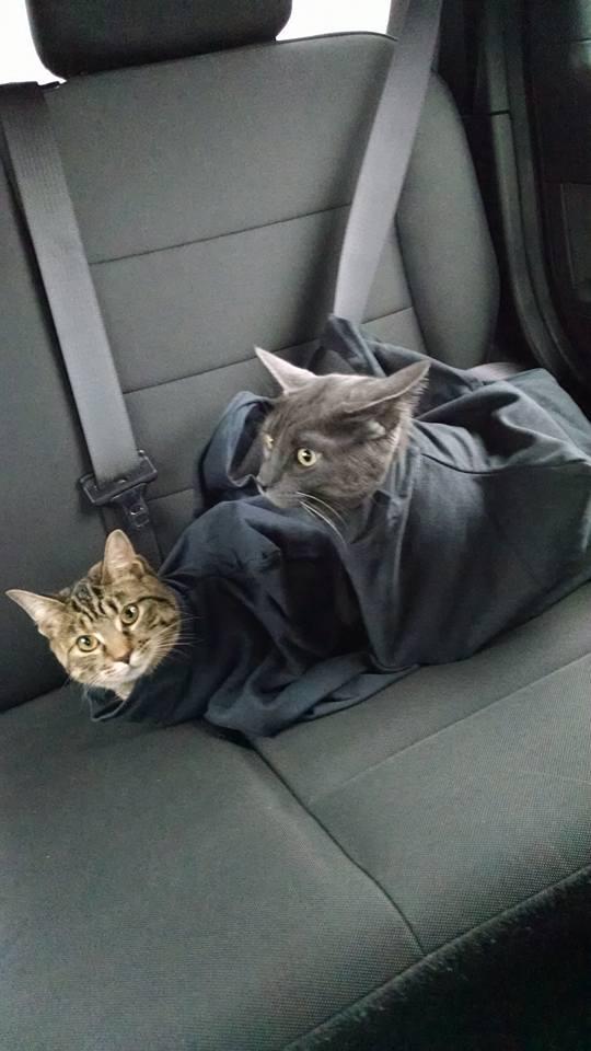 印度 Cat in the Bag 貓貓外出袋6