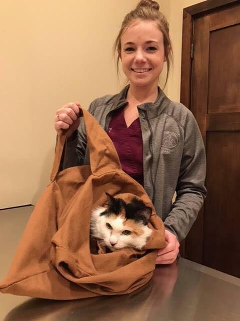 印度 Cat in the Bag 貓貓外出袋9