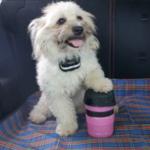 狗狗專用的水瓶